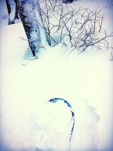 it was knee deep in the trees #secretstash
